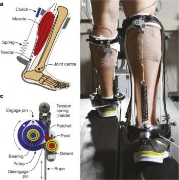 무동력발목외골격은 발목과 무릎에 착용하는 간단한 구조로 걸을 때 뒤쪽에 있는 스프링이 에너지를 저장하고 방출하면서 근육의 일을 덜어준다. 이 과정에 클러치(아래 오른쪽)가 중요한 역할을 한다. - 네이처 제공